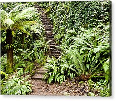 The Forest Stairwell Acrylic Print by Rae Tucker