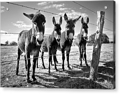 Acrylic Print featuring the photograph The Four Amigos by Sharon Jones