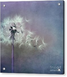 The Four Winds Acrylic Print by Priska Wettstein
