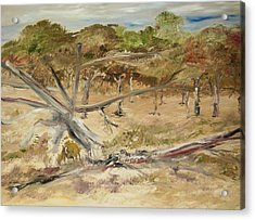 The Fourty-niner Highwaytrees Acrylic Print by Edward Wolverton