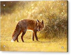 The Fox And The Fairy Dust Acrylic Print by Roeselien Raimond