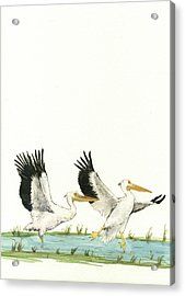 The Fox And The Pelicans Acrylic Print by Juan Bosco