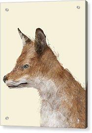The Fox Acrylic Print by Bri B