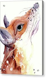Acrylic Print featuring the painting The Fox by Dawn Derman