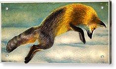 The Fox Hop Acrylic Print