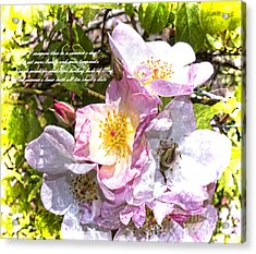 The Frailty Of Summer Roses And Of Love Acrylic Print by Brenda Kean