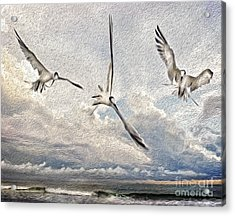 The Freedom Of Flight Acrylic Print