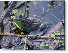 The Frog Remains Acrylic Print