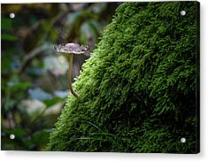 The Fungus In The Spotlight Acrylic Print