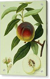 The Galande Peach Acrylic Print