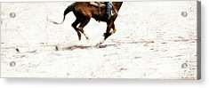 The Galloping  Acrylic Print by Steven Digman