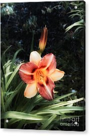 The Garden At St. Stephen's- May 2016 Acrylic Print