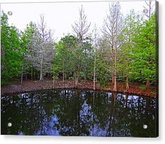 The Gator Hole At Green Cay In Florida Acrylic Print