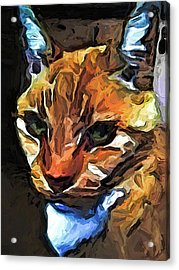 The Gaze Of The Gold Cat Acrylic Print