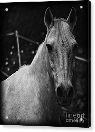 The General Acrylic Print