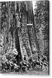 The General Grant Tree Acrylic Print