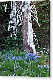 The Ghost Tree Acrylic Print