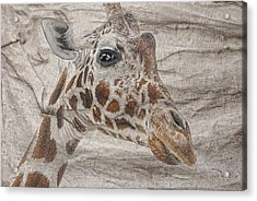 Acrylic Print featuring the photograph The Giraffe  by Dyle   Warren