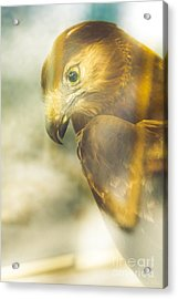 The Glass Case Eagle Acrylic Print by Jorgo Photography - Wall Art Gallery