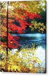 The Glory Of A New England Autumn Acrylic Print