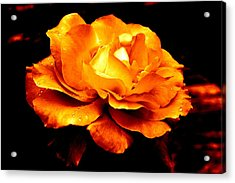 The Glow Of Amber.... Acrylic Print