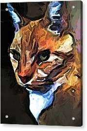 The Gold Cat With The Stage Presence Acrylic Print