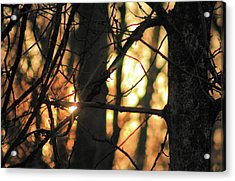 Acrylic Print featuring the photograph The Golden Hour by Bruce Patrick Smith