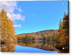 Acrylic Print featuring the photograph The Golden Tamaracks Of Woodcraft Camp by David Patterson