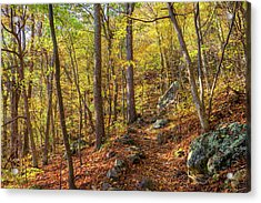 Acrylic Print featuring the photograph The Golden Trail by Lori Coleman