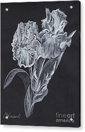 The Gossamer Iris Acrylic Print by Carol Wisniewski