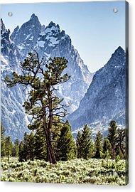 The Grand Teton With Pine And Sage Acrylic Print