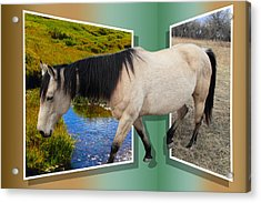 The Grass Is Always Greener On The Other Side Acrylic Print by Shane Bechler