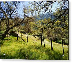 The Grass Is Always Greener Acrylic Print by Steve Ponting