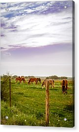 Acrylic Print featuring the photograph The Grass Was Greener by Melinda Ledsome