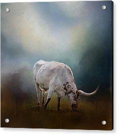 The Grazing Texas Longhorn Acrylic Print