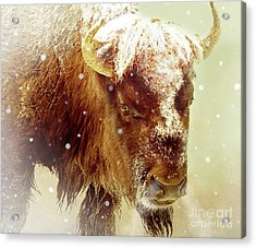 The Great Bison Acrylic Print