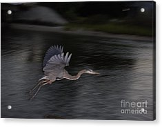 The Great Blu Acrylic Print by Debbie May