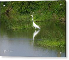 Great Egret By The Waters Edge Acrylic Print
