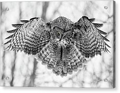 Acrylic Print featuring the photograph The Great Grey Owl In Black And White by Mircea Costina Photography