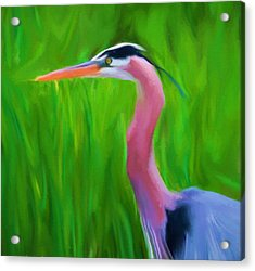 The Great Heron Acrylic Print by Dan Sproul