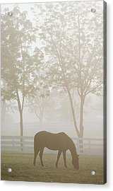 The Great Thoroughbred Gelding Forego Acrylic Print by Raymond Gehman