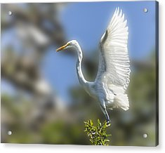 Acrylic Print featuring the photograph The Great White Egret by Paula Porterfield-Izzo