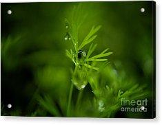 The Green Drop Acrylic Print