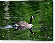 The Green Lake Acrylic Print by Paul SEQUENCE Ferguson             sequence dot net