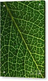The Green Network Acrylic Print by Ana V Ramirez