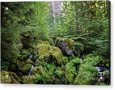 The Green Scene Acrylic Print by Carrie Cole