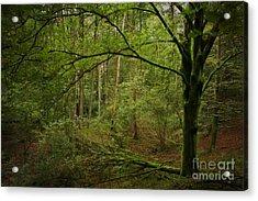 The Green Tree Acrylic Print by Rikard Strand