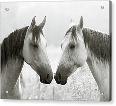 The Greys Acrylic Print by Ron  McGinnis