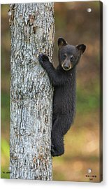 The Gripper Acrylic Print by Dale J Martin