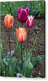 The Group Acrylic Print by James Steele
